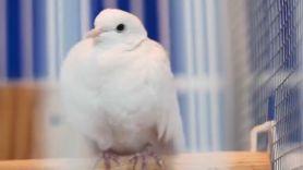 Divinity, Prince's longtime dove