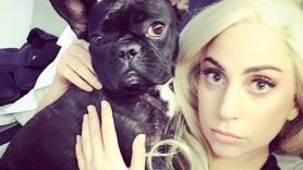 Lady Gaga with one of her Bulldogs, photo via Instagram